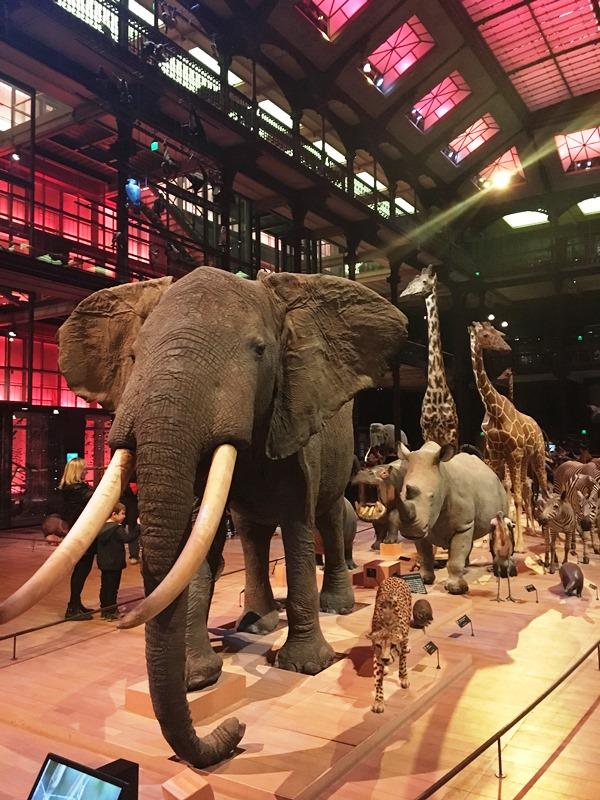 3ème_MuseumHistoireNaturelle_Paris_mfrdulochois